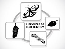 Butterfly life cycle Stock Image