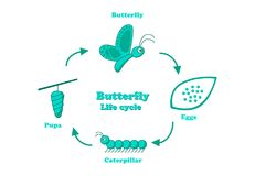 Butterfly life cycle in monochrome style, vector. Design Royalty Free Stock Photos