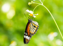 Butterfly life Royalty Free Stock Photos