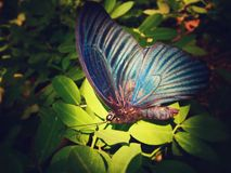 Butterfly. The butterfly like sleeping beauty quietly lying in the sun Royalty Free Stock Photography