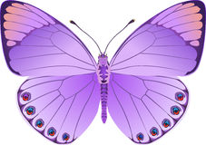 Butterfly lilac fantasy Royalty Free Stock Photo