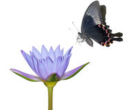 Butterfly and lily flower stock photography