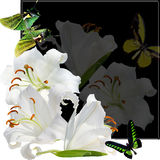 Butterfly and  lily Stock Photography