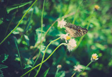 The butterfly with little grass flowers Royalty Free Stock Images