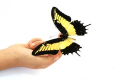 Butterfly on little hand Royalty Free Stock Photo
