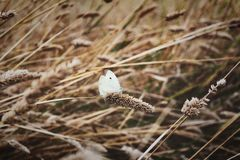 Butterfly in long grass stock photo