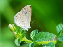 Beautiful butterfly decends on the flower. Butterfly looks for food and pollination every day in the morning Stock Photo