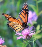 Butterfly. Love to watch the butterflies in the spring Royalty Free Stock Photo