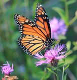 Butterfly. Love to watch the butterflies in the spring Royalty Free Stock Photography