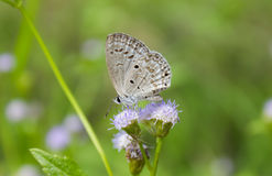 Butterfly and lovely sweet wild flower Stock Photos