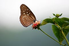 The butterfly loves the flower Stock Photography