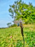 A butterfly on a luminous shining meadow Stock Photo