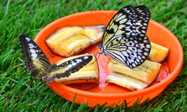 Butterfly lunch Stock Photo