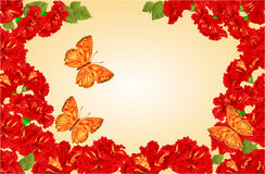 Butterfly Lycaena virgaureae and red hibiscus vector Stock Photos