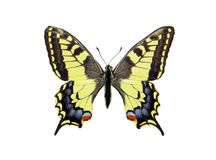 Butterfly machaon isolated on white. Wings of a butterfly Royalty Free Stock Images