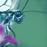Butterfly macro. Macro of a butterfly on a pink flower stock photo