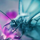 Butterfly macro. Macro of a butterfly on a pink flower stock image