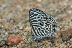 Butterfly Macro , Butterfly. stock photo