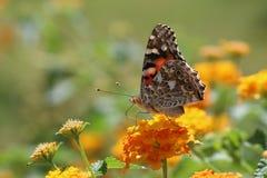 Butterfly, Macro, Close Stock Photo