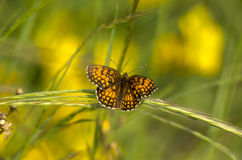Butterfly3 Royalty Free Stock Images