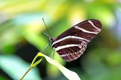 Butterfly Macro Stock Photos