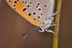 Butterfly. Macro detail of butterfly on a twig royalty free stock photo