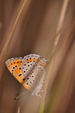 Butterfly. Macro detail of butterfly on a twig royalty free stock images