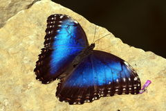 Butterfly macro f Stock Photography