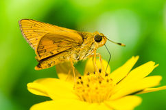 Butterfly macro in green nature royalty free stock photos