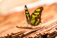 Butterfly. Macro insect fly Royalty Free Stock Image