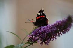 Butterfly. Macro photo Butterfly Stock Photos