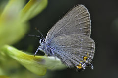 Butterfly. Macro photo of butterfly hovers in spring before summer Stock Image
