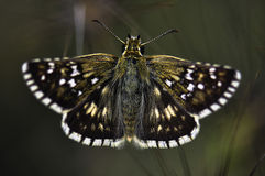 Butterfly. Macro photo of butterfly hovers in spring before summer Stock Photo