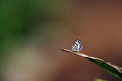 Butterfly. The butterfly by macro photography Royalty Free Stock Images