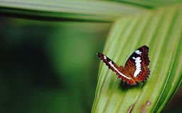 Butterfly. The Butterfly by macro photography Stock Image