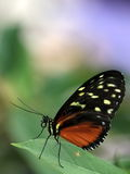 Butterfly macro s Royalty Free Stock Photo