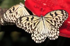 Butterfly. Macro shot of butterfly macro Royalty Free Stock Photo