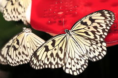 Butterfly. Macro shot of butterfly macro Royalty Free Stock Image
