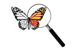 Butterfly with magnifying glass Royalty Free Stock Image