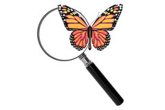 Butterfly with magnifying glass Stock Images