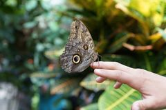 Butterfly at mainau island in south germany stock photos