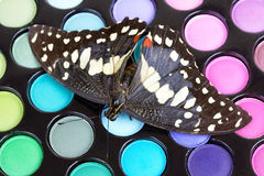 Butterfly on make-up eye shadows Stock Photo