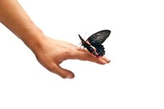 Butterfly on man's hand Royalty Free Stock Image