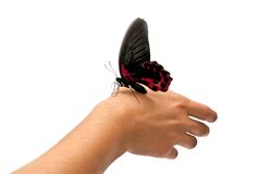 Butterfly on man's hand Stock Photography