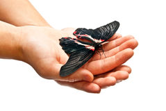 Butterfly in man's hands Royalty Free Stock Photography