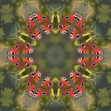 Butterfly mandala. Mandala with butterfly Royalty Free Stock Photo