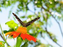 Butterfly On Marigold Stock Photos