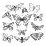 Butterfly, mariposa sketch stock illustration