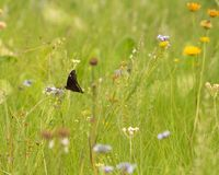 A butterfly in a meadow stock image