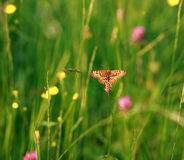 Butterfly in meadow in flowers on green background Royalty Free Stock Photo